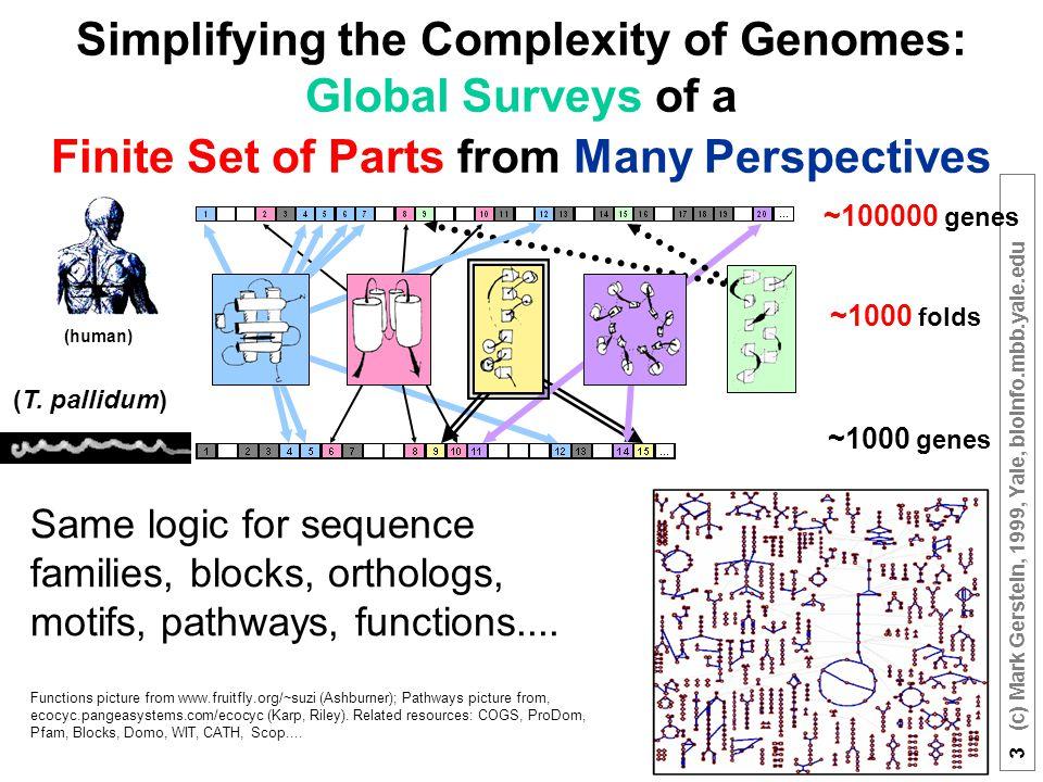 3 (c) Mark Gerstein, 1999, Yale, bioinfo.mbb.yale.edu ~1000 folds ~100000 genes ~1000 genes (human) (T.
