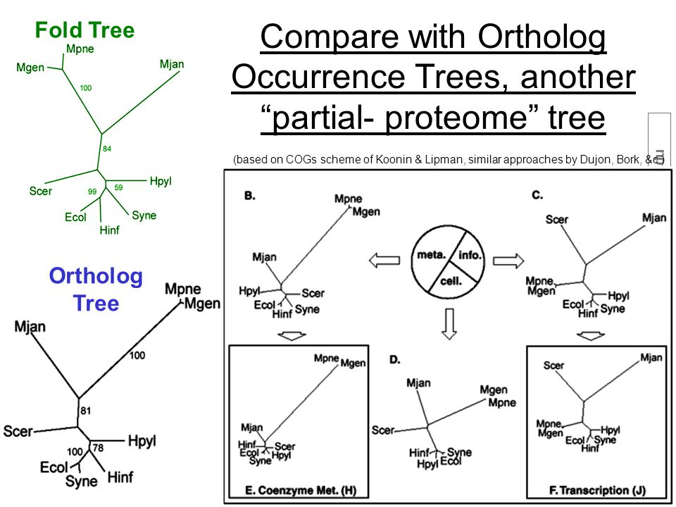 36 (c) Mark Gerstein, 1999, Yale, bioinfo.mbb.yale.edu (based on COGs scheme of Koonin & Lipman, similar approaches by Dujon, Bork, &c.) Compare with Ortholog Occurrence Trees, another partial- proteome tree Fold Tree Ortholog Tree