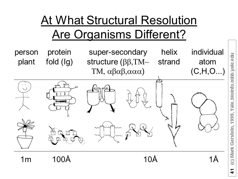41 (c) Mark Gerstein, 1999, Yale, bioinfo.mbb.yale.edu At What Structural Resolution Are Organisms Different.