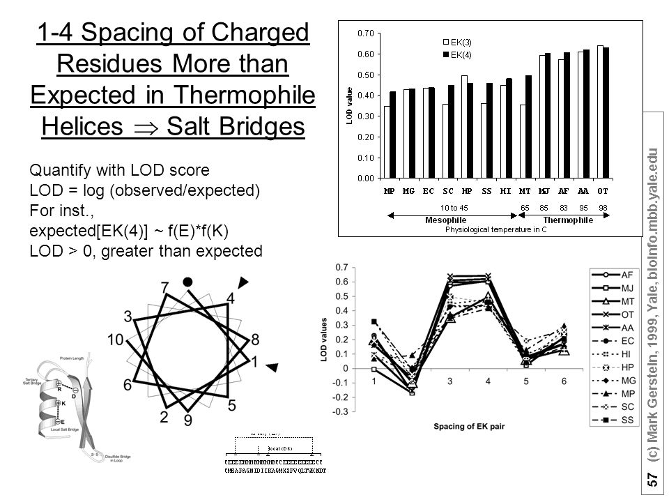 57 (c) Mark Gerstein, 1999, Yale, bioinfo.mbb.yale.edu 1-4 Spacing of Charged Residues More than Expected in Thermophile Helices  Salt Bridges Quantify with LOD score LOD = log (observed/expected) For inst., expected[EK(4)] ~ f(E)*f(K) LOD > 0, greater than expected