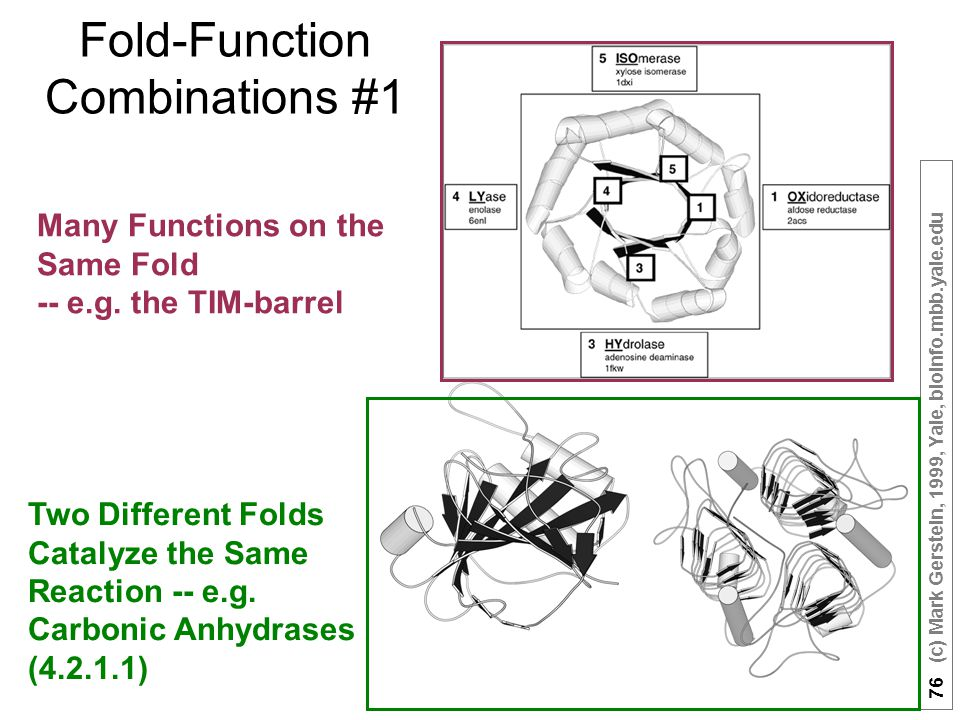 76 (c) Mark Gerstein, 1999, Yale, bioinfo.mbb.yale.edu Fold-Function Combinations #1 Many Functions on the Same Fold -- e.g.
