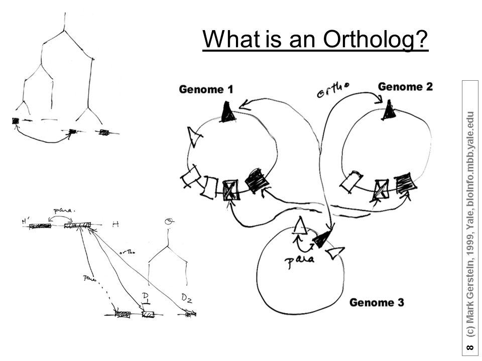 8 (c) Mark Gerstein, 1999, Yale, bioinfo.mbb.yale.edu What is an Ortholog?