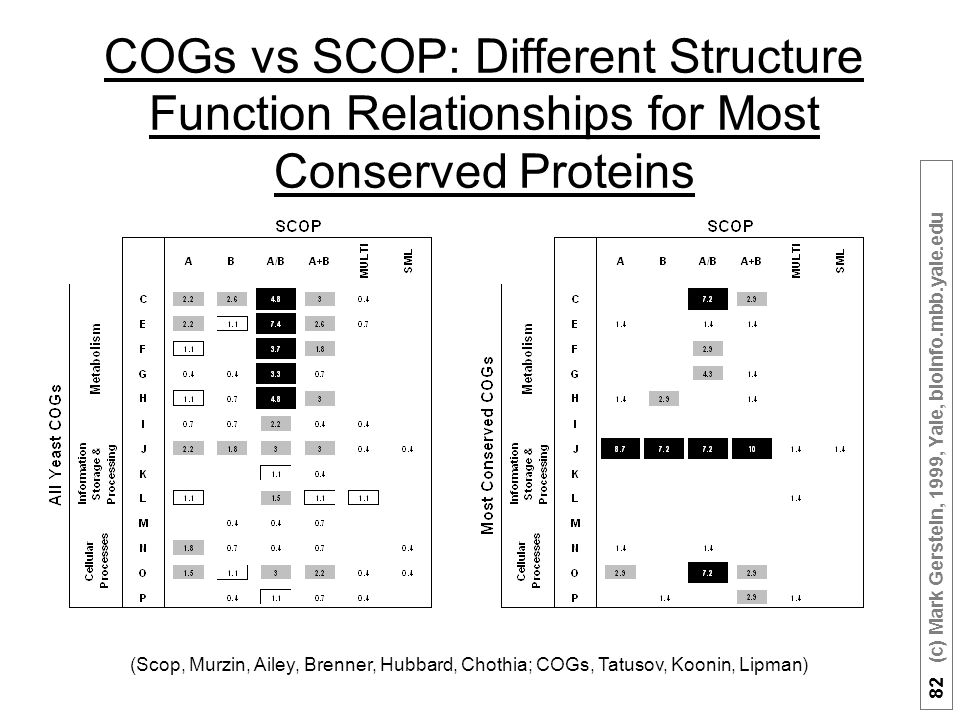 82 (c) Mark Gerstein, 1999, Yale, bioinfo.mbb.yale.edu COGs vs SCOP: Different Structure Function Relationships for Most Conserved Proteins (Scop, Murzin, Ailey, Brenner, Hubbard, Chothia; COGs, Tatusov, Koonin, Lipman)