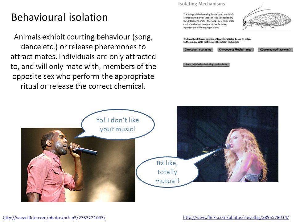 Behavioural isolation Animals exhibit courting behaviour (song, dance etc.) or release pheremones to attract mates.