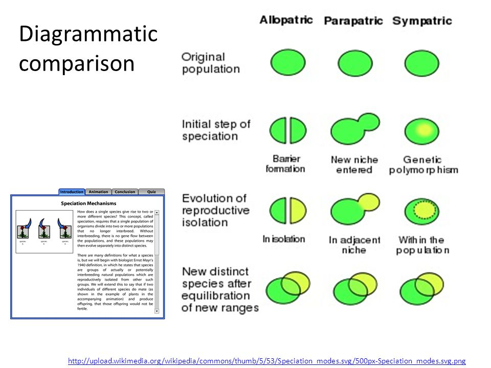 http://upload.wikimedia.org/wikipedia/commons/thumb/5/53/Speciation_modes.svg/500px-Speciation_modes.svg.png Diagrammatic comparison