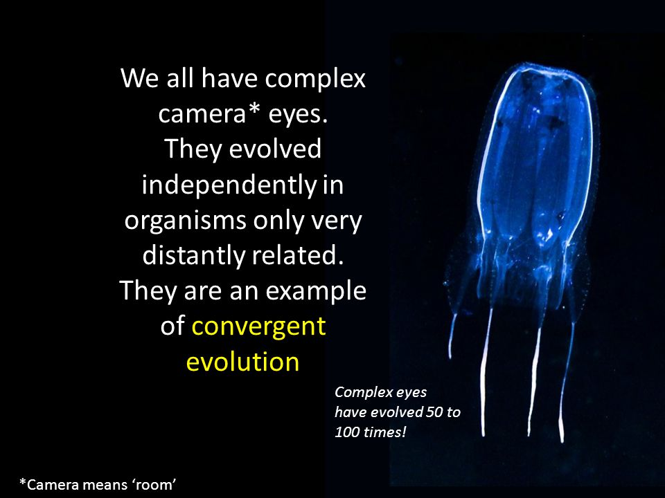 We all have complex camera* eyes.