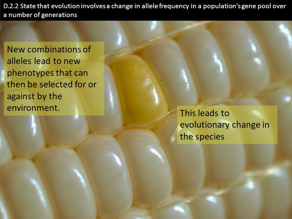 D.2.2 State that evolution involves a change in allele frequency in a population's gene pool over a number of generations New combinations of alleles lead to new phenotypes that can then be selected for or against by the environment.