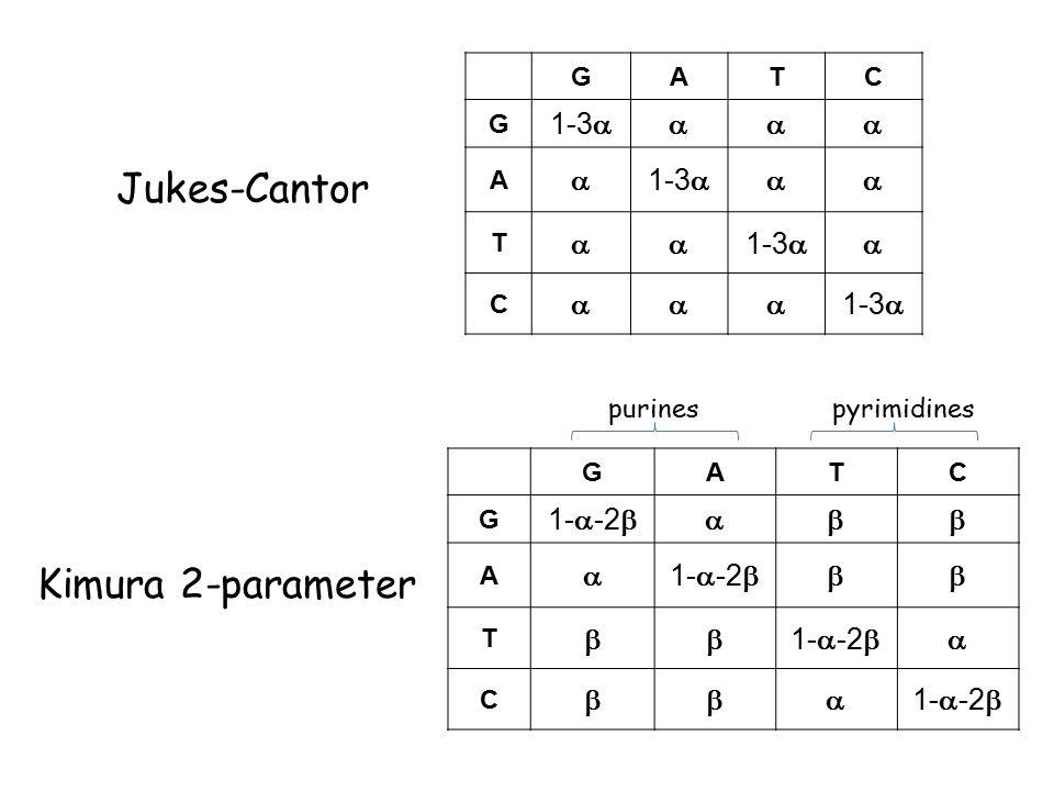 GATC G 1-3  A   T   C  GATC G 1-  -2  A   T   C  purinespyrimidines Jukes-Cantor Kimura 2-parameter
