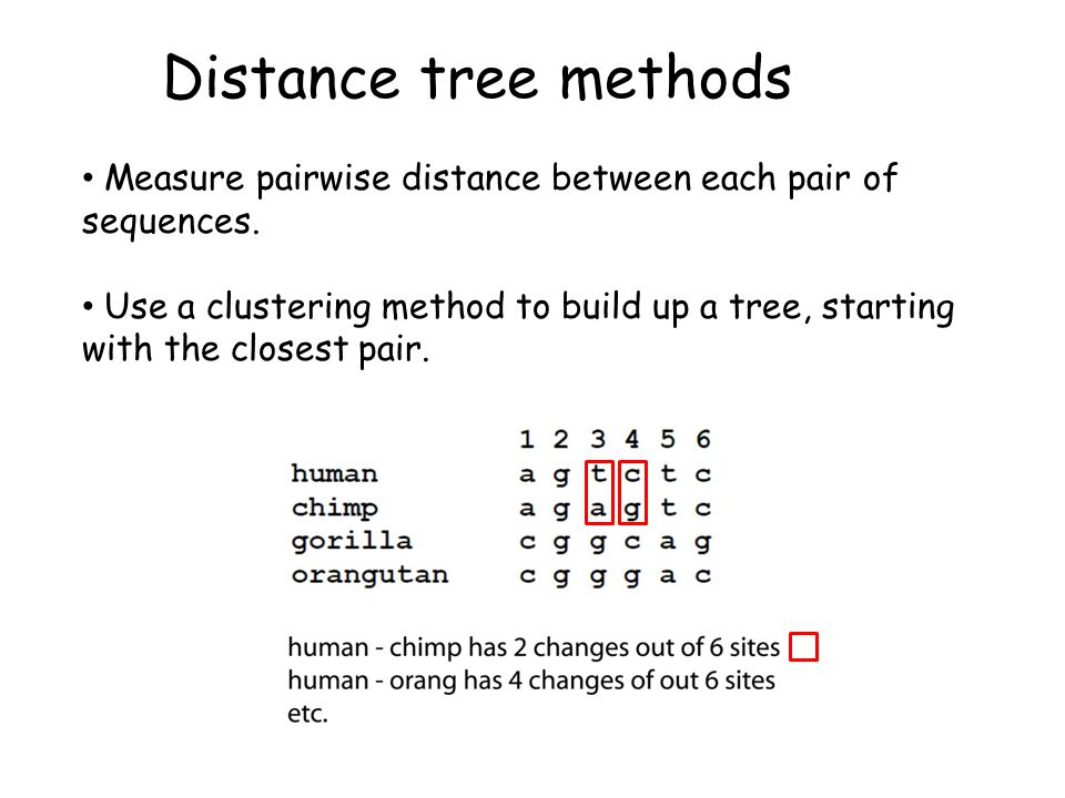 Distance tree methods Measure pairwise distance between each pair of sequences. Use a clustering method to build up a tree, starting with the closest