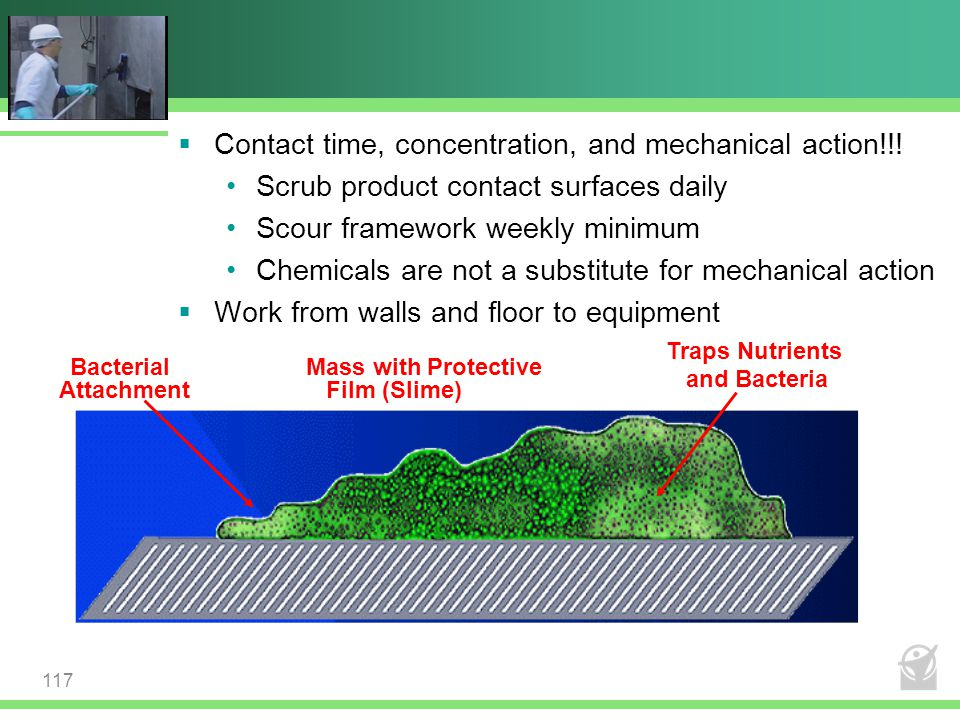 Bacterial Attachment Mass with Protective Film (Slime) Traps Nutrients and Bacteria  Contact time, concentration, and mechanical action!!! Scrub prod