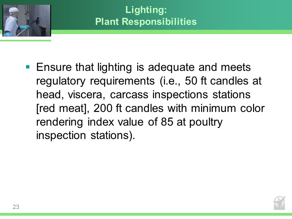Lighting: Plant Responsibilities  Ensure that lighting is adequate and meets regulatory requirements (i.e., 50 ft candles at head, viscera, carcass i