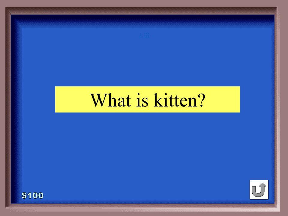 3-100 1 - 100 deer : fawn :: cat :_____ foal kitten joey