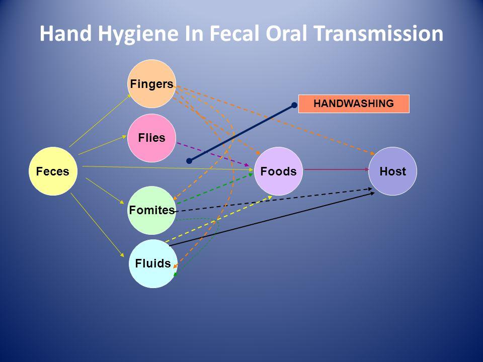 Flies Fomites Fluids FecesFoodsHost HANDWASHING Fingers Hand Hygiene In Fecal Oral Transmission