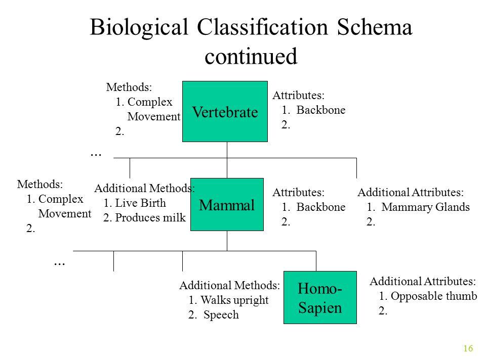 16 Biological Classification Schema continued Vertebrate Homo- Sapien Mammal...