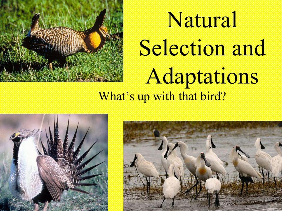 Vocabulary Adaptation Natural Selection Mutation