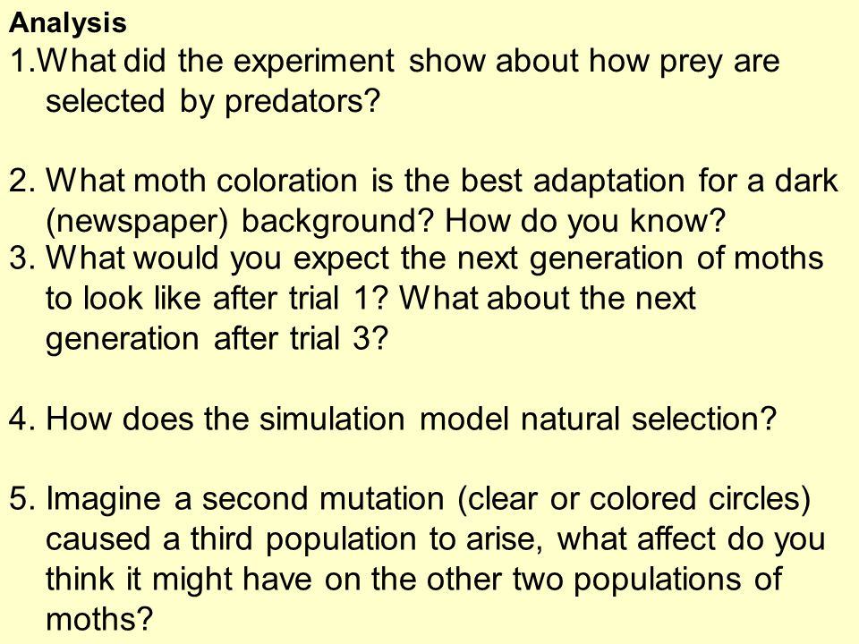 Analysis 1.What did the experiment show about how prey are selected by predators? 2. What moth coloration is the best adaptation for a dark (newspaper