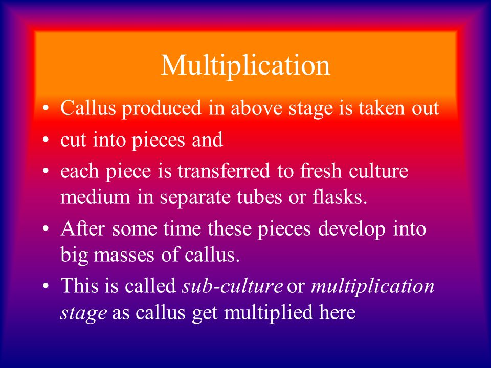 Multiplication Callus produced in above stage is taken out cut into pieces and each piece is transferred to fresh culture medium in separate tubes or