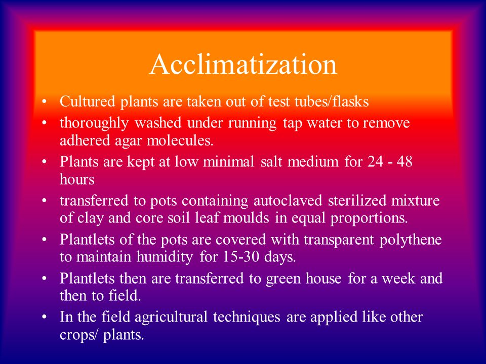 Acclimatization Cultured plants are taken out of test tubes/flasks thoroughly washed under running tap water to remove adhered agar molecules. Plants