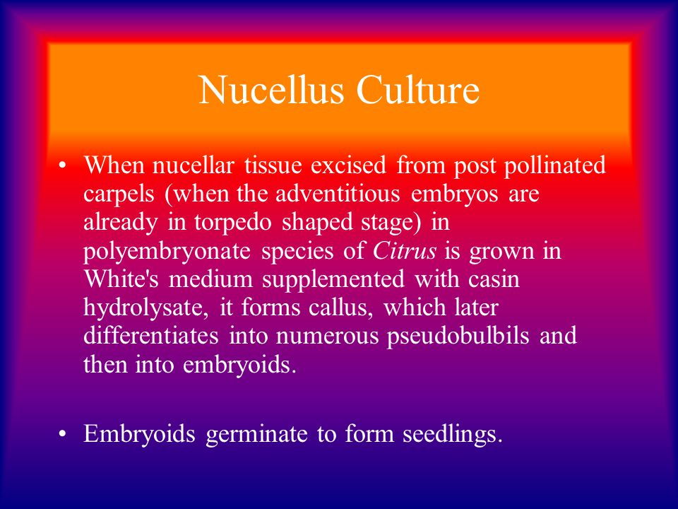 Nucellus Culture When nucellar tissue excised from post pollinated carpels (when the adventitious embryos are already in torpedo shaped stage) in poly