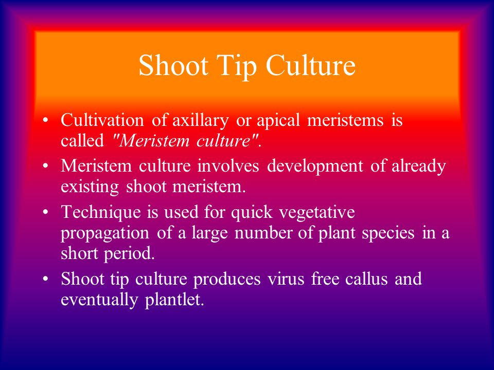 Shoot Tip Culture Cultivation of axillary or apical meristems is called