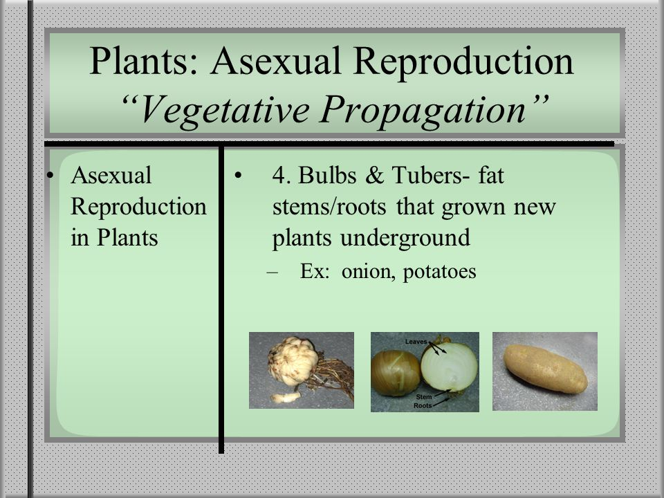 Plants: Asexual Reproduction Vegetative Propagation Asexual Reproduction in Plants 4.