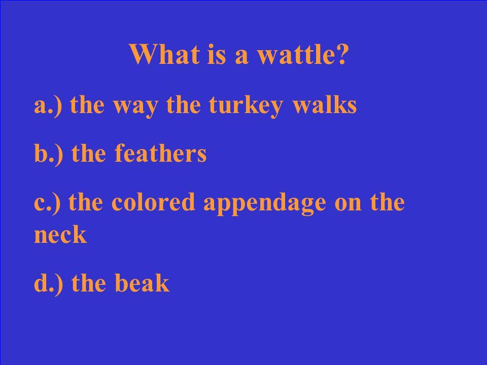 What is a wattle.