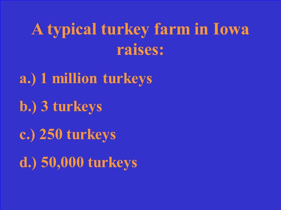 A typical turkey farm in Iowa raises: a.) 1 million turkeys b.) 3 turkeys c.) 250 turkeys d.) 50,000 turkeys