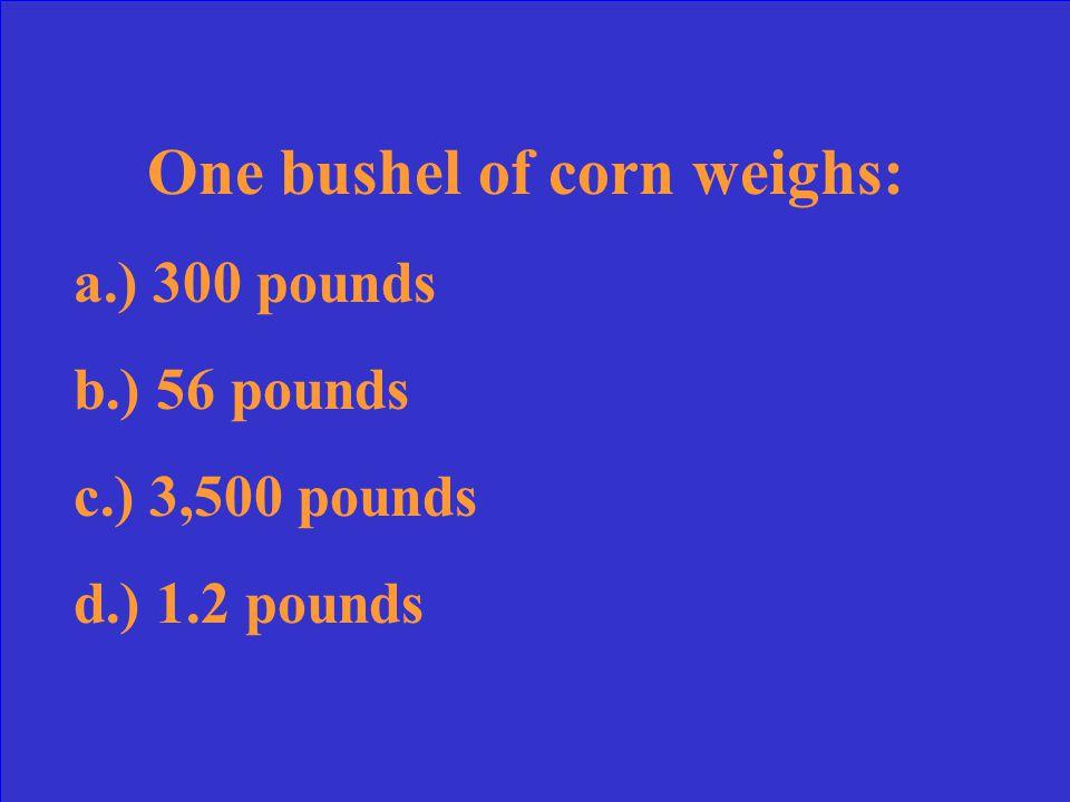 One bushel of corn weighs: a.) 300 pounds b.) 56 pounds c.) 3,500 pounds d.) 1.2 pounds