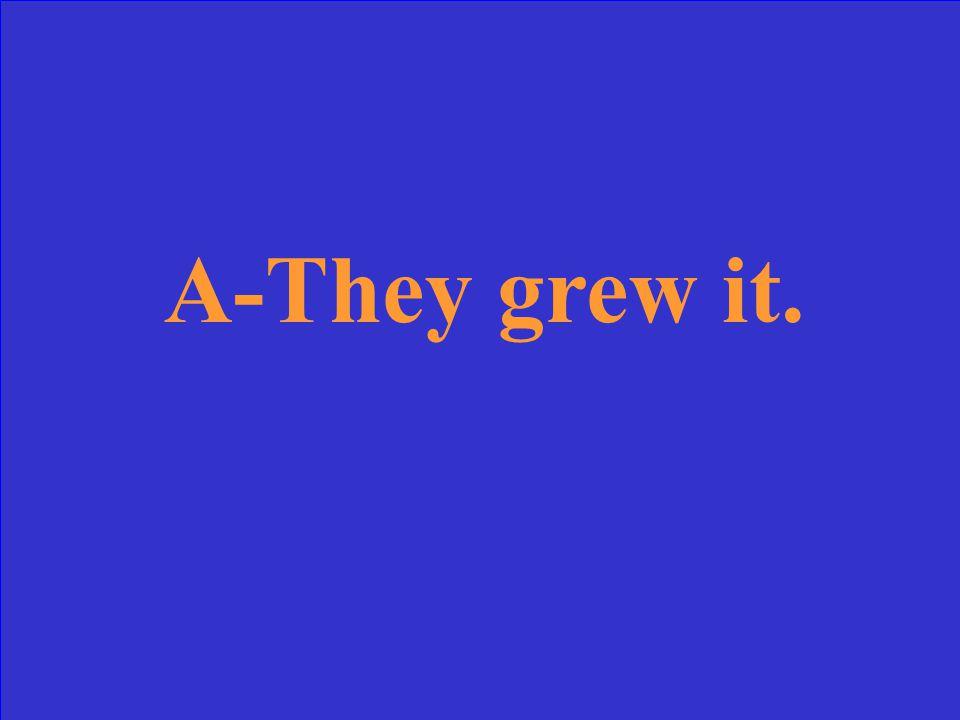 A-They grew it.