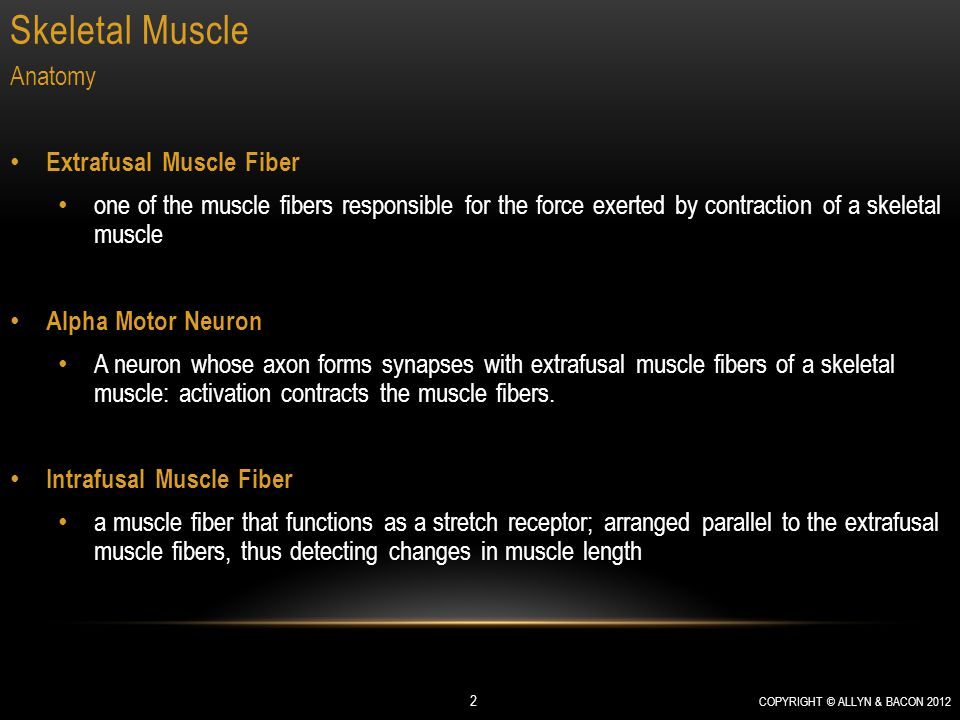 Skeletal Muscle COPYRIGHT © ALLYN & BACON 2012 2 Anatomy Extrafusal Muscle Fiber one of the muscle fibers responsible for the force exerted by contraction of a skeletal muscle Alpha Motor Neuron A neuron whose axon forms synapses with extrafusal muscle fibers of a skeletal muscle: activation contracts the muscle fibers.