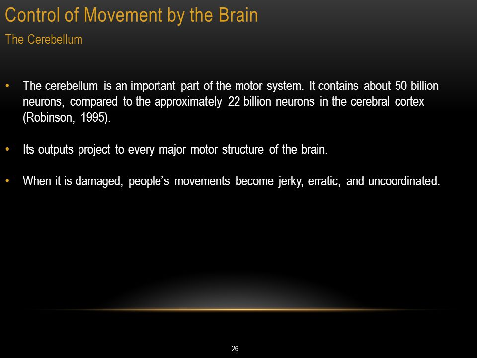 Control of Movement by the Brain 26 The Cerebellum The cerebellum is an important part of the motor system.