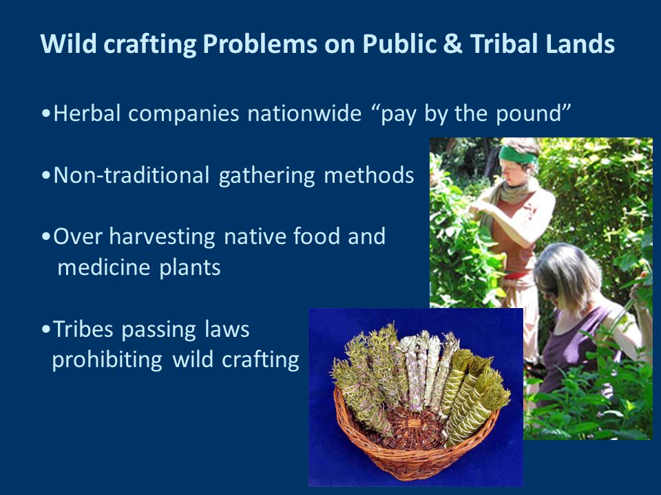 Wild crafting Problems on Public & Tribal Lands Herbal companies nationwide pay by the pound Non-traditional gathering methods Over harvesting native food and medicine plants Tribes passing laws prohibiting wild crafting