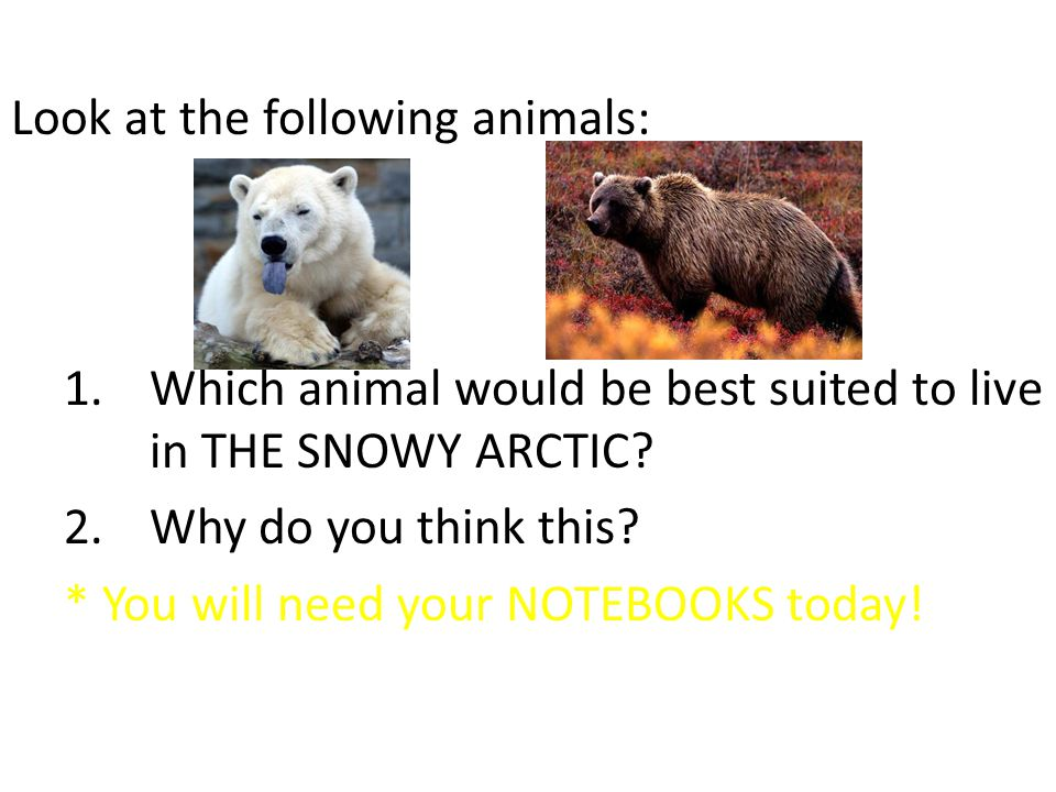 Look at the following animals: 1.Which animal would be best suited to live in THE SNOWY ARCTIC.