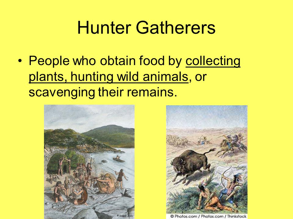 Hunter Gatherers People who obtain food by collecting plants, hunting wild animals, or scavenging their remains.