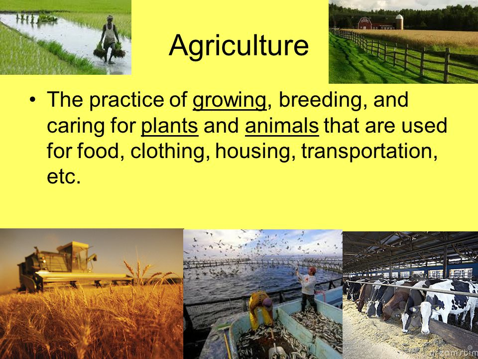 Agriculture The practice of growing, breeding, and caring for plants and animals that are used for food, clothing, housing, transportation, etc.