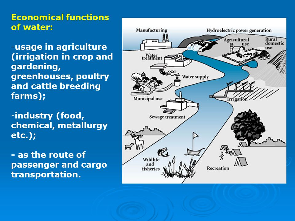 Economical functions of water: -usage in agriculture (irrigation in crop and gardening, greenhouses, poultry and cattle breeding farms); -industry (food, chemical, metallurgy etc.); - as the route of passenger and cargo transportation.