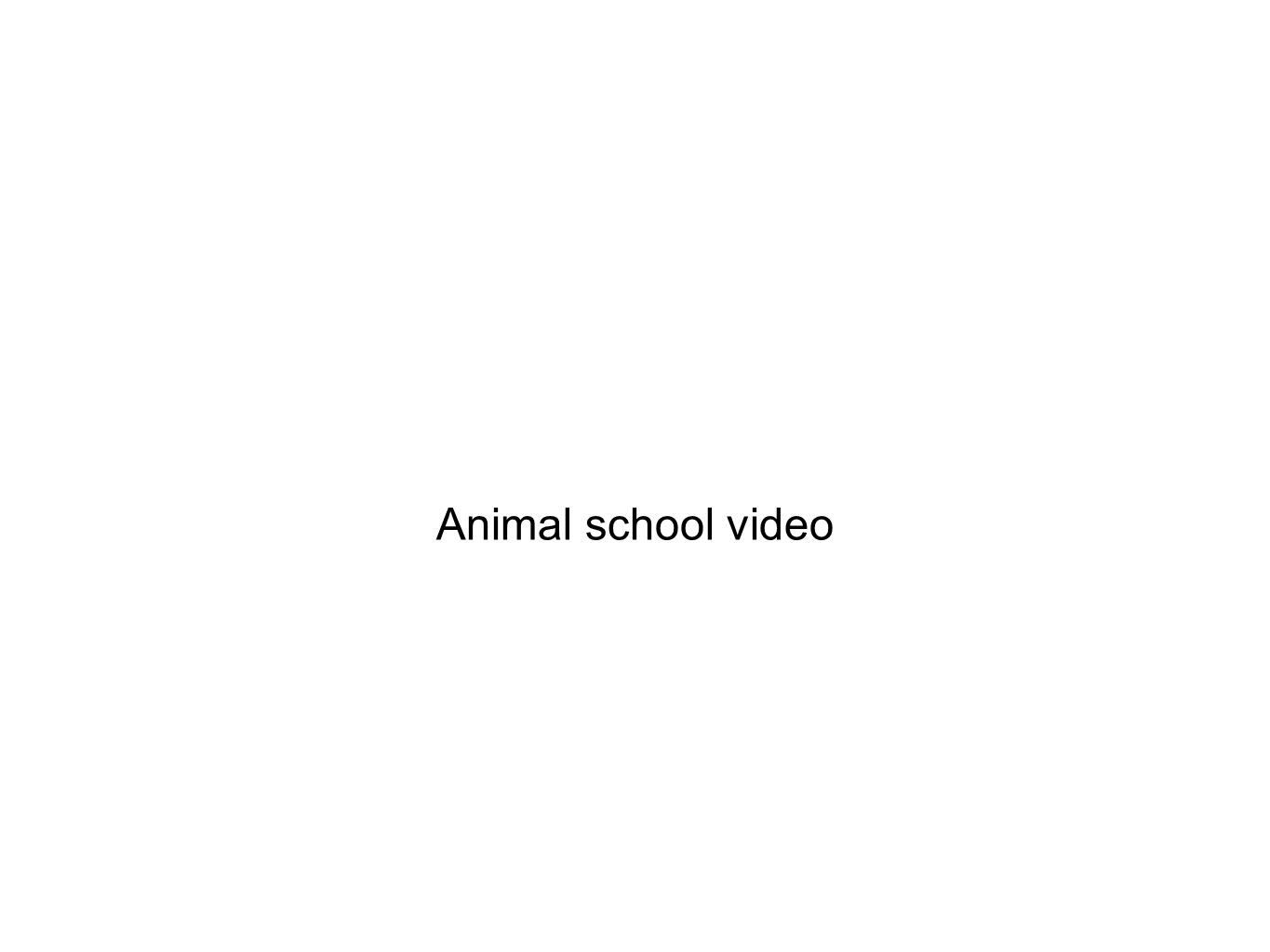 Animal school video
