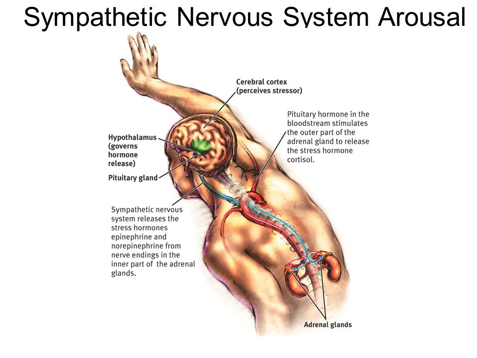 Sympathetic Nervous System Arousal