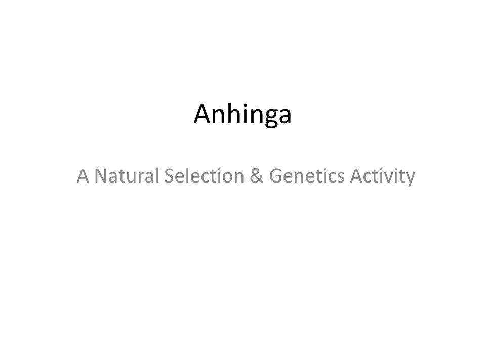 Anhinga A Natural Selection & Genetics Activity