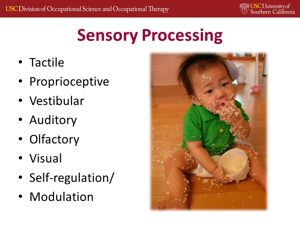 Sensory Processing Tactile Proprioceptive Vestibular Auditory Olfactory Visual Self-regulation/ Modulation