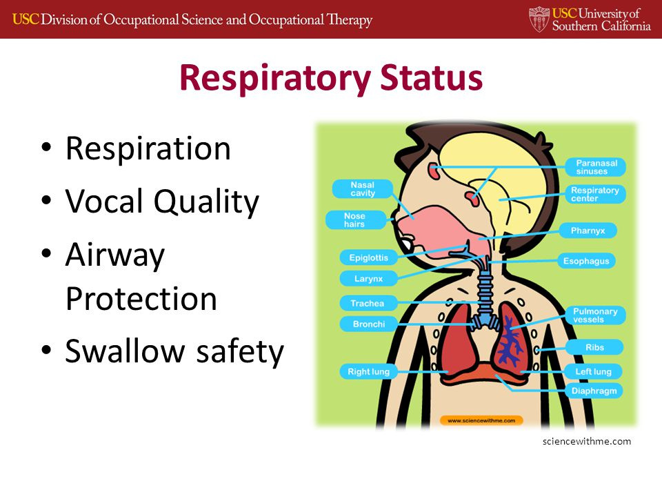 Respiratory Status Respiration Vocal Quality Airway Protection Swallow safety sciencewithme.com
