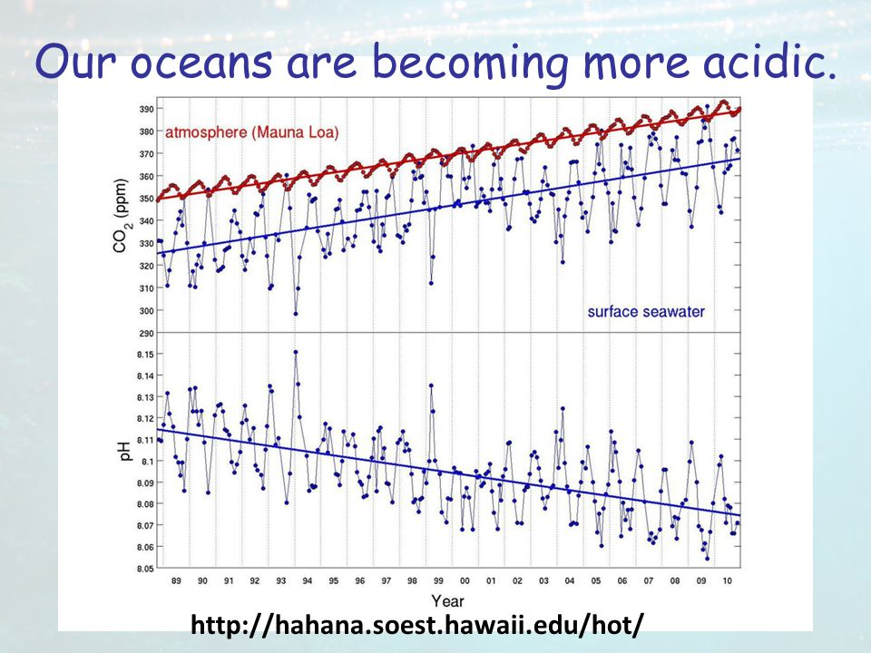 Our oceans are becoming more acidic.