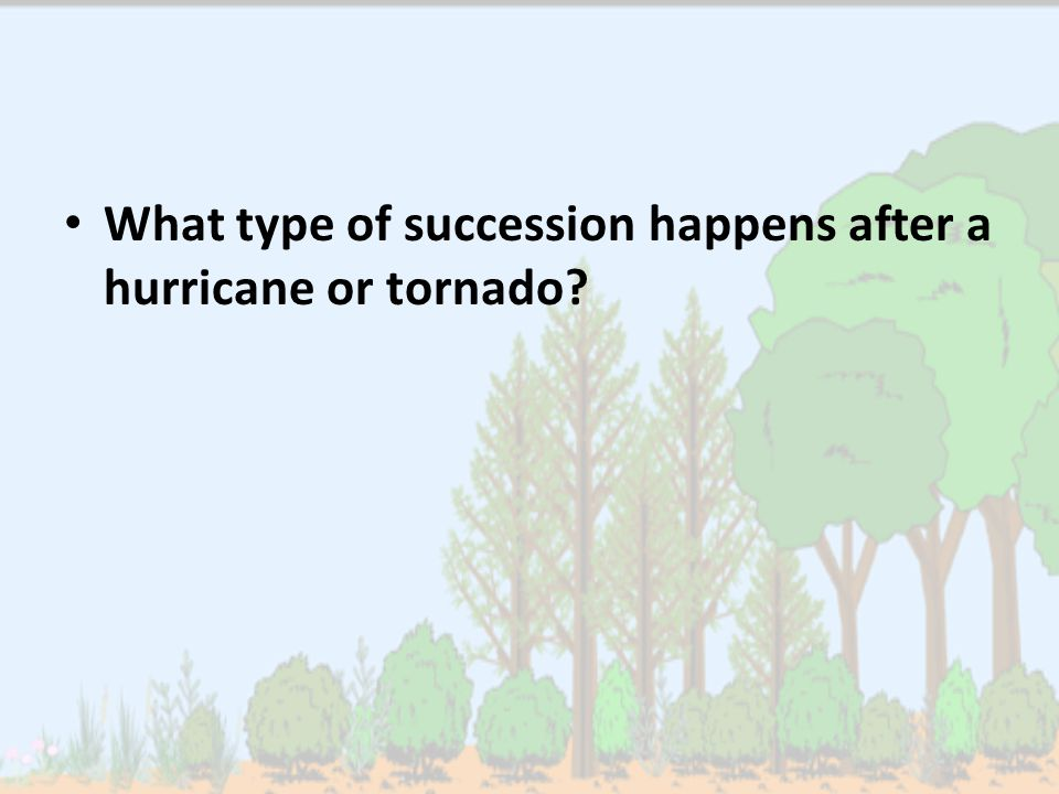 What type of succession happens after a hurricane or tornado?
