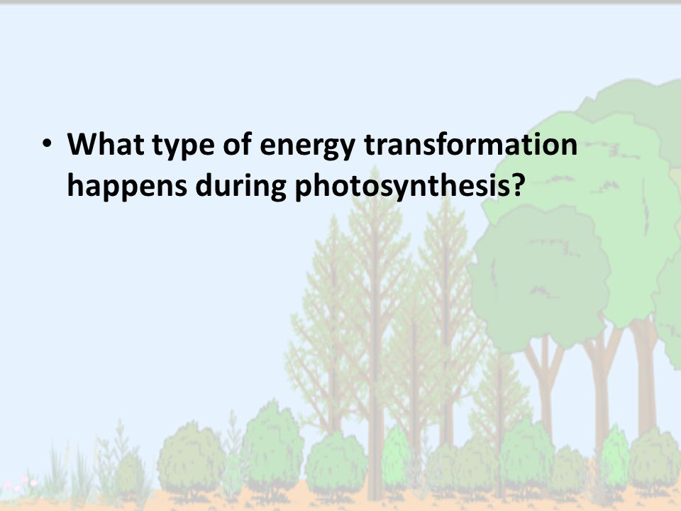 What type of energy transformation happens during photosynthesis?