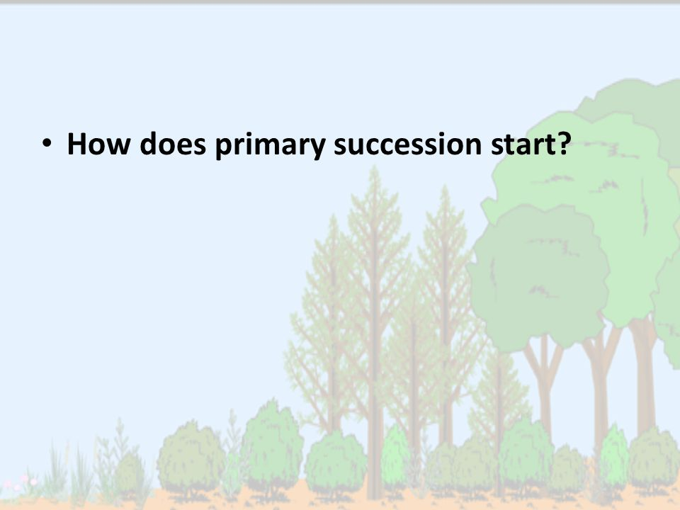 How does primary succession start