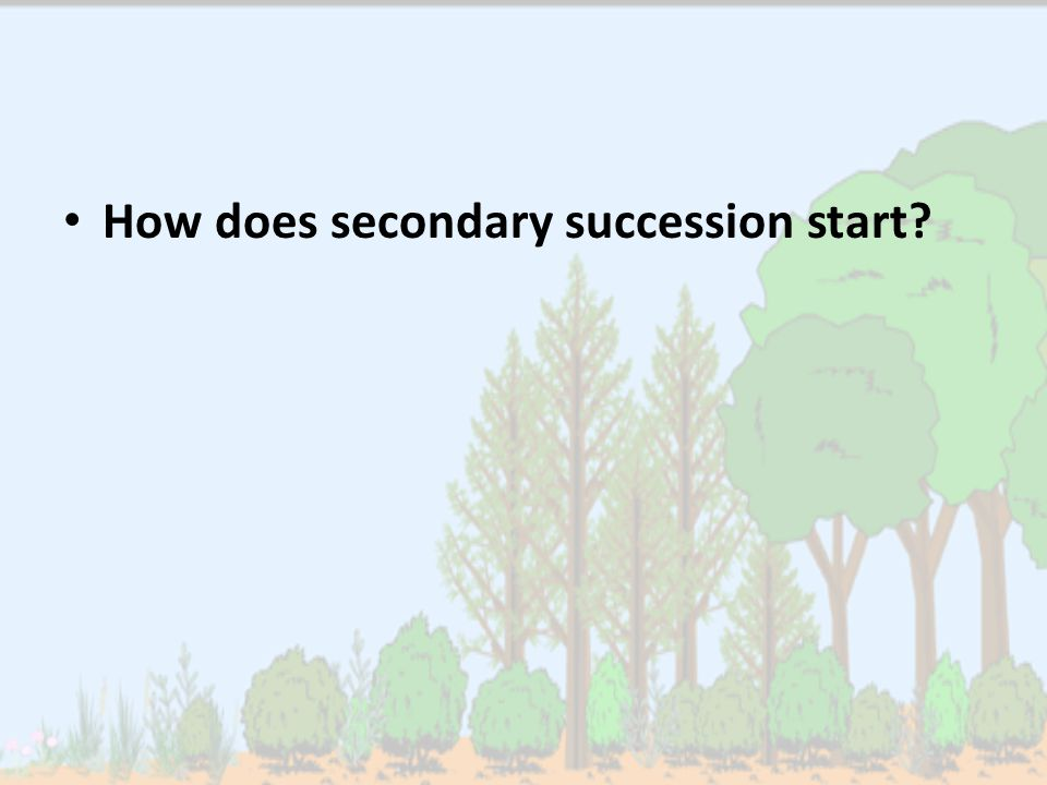 How does secondary succession start?