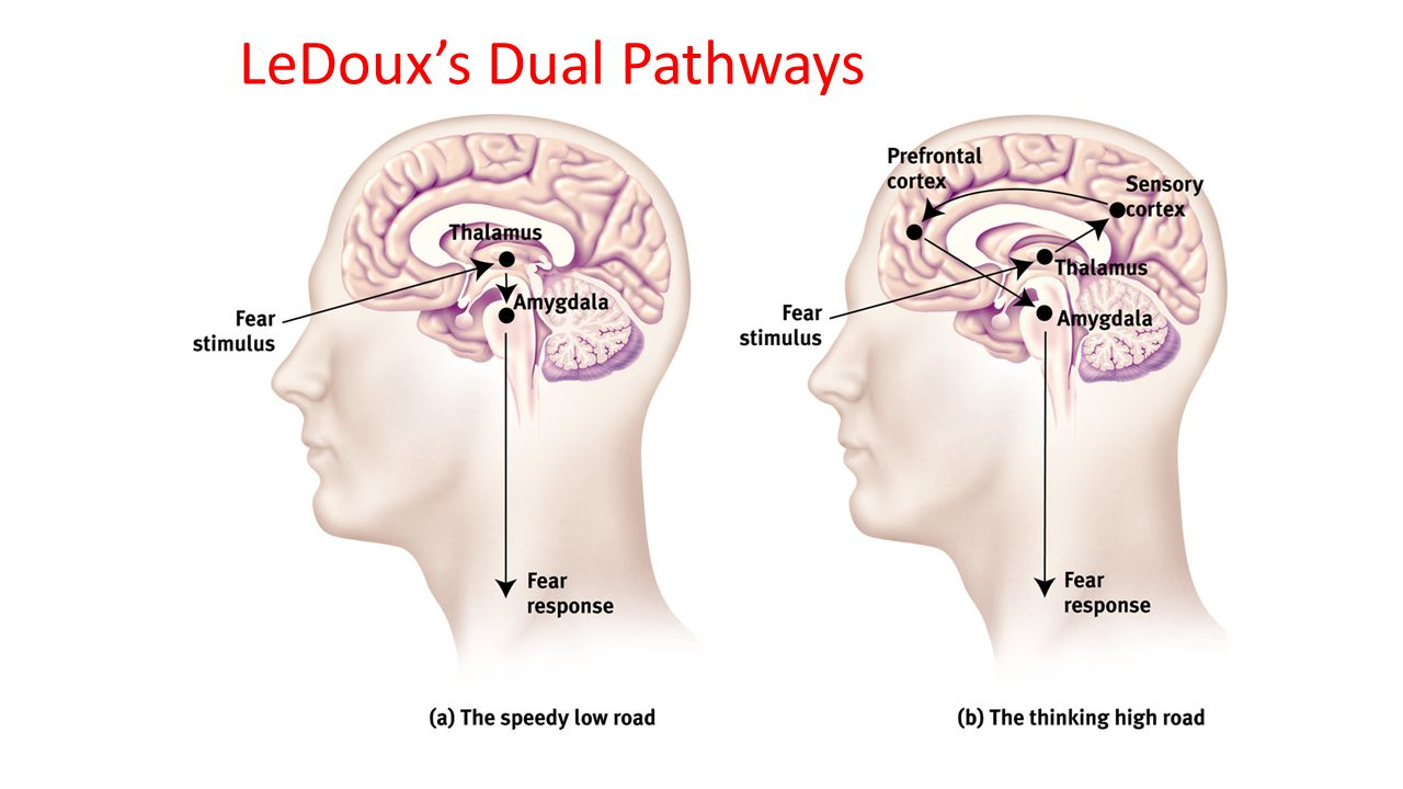 LeDoux's Dual Pathways