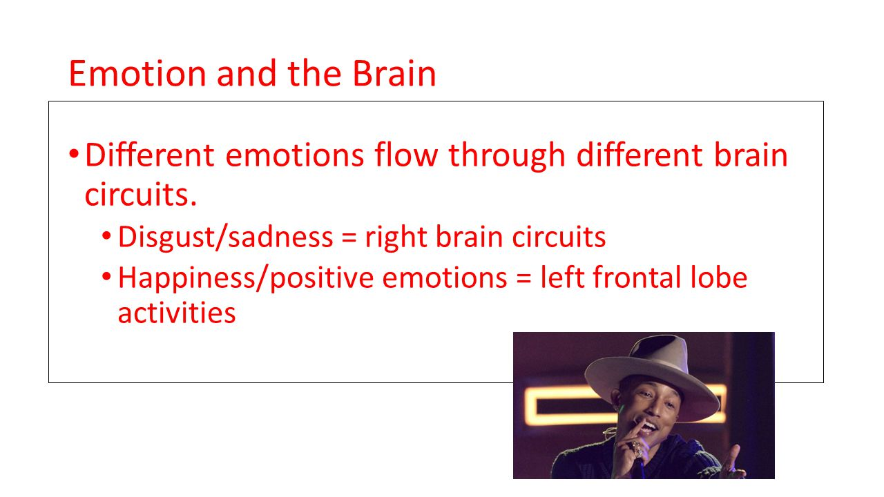Emotion and the Brain Different emotions flow through different brain circuits.