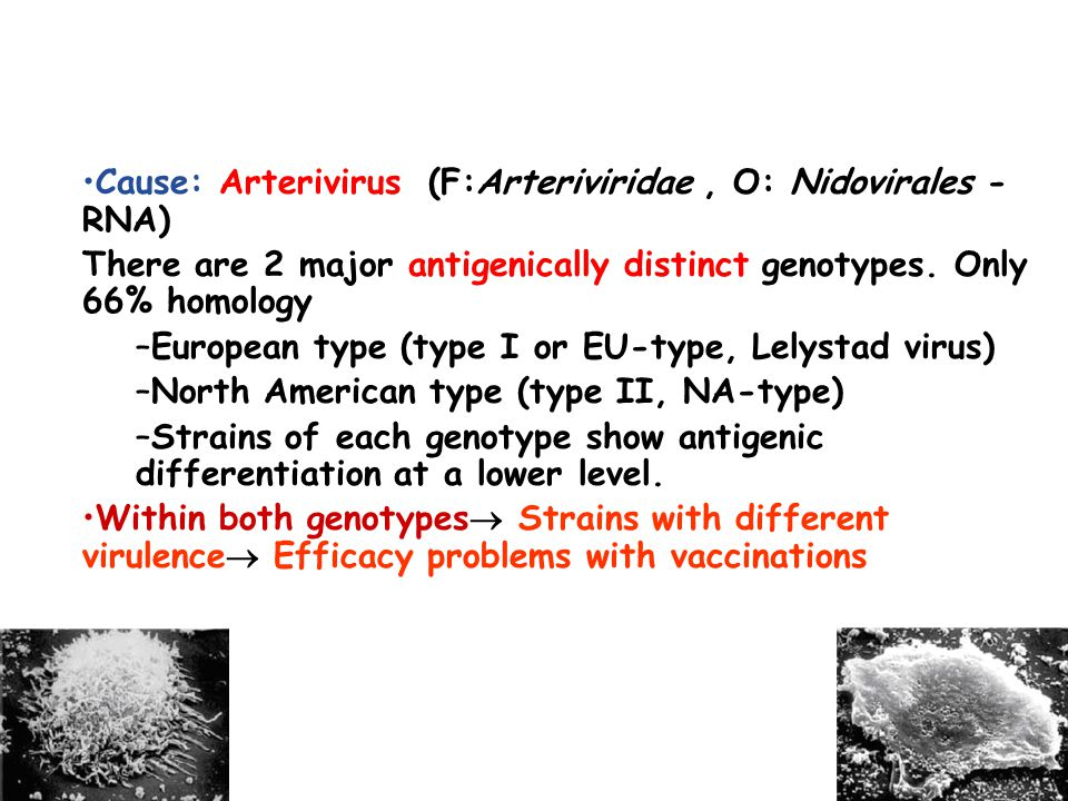 Cause: Arterivirus (F:Arteriviridae, O: Nidovirales - RNA) There are 2 major antigenically distinct genotypes.