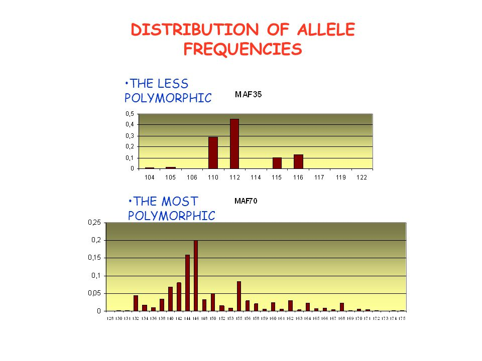 DISTRIBUTION OF ALLELE FREQUENCIES THE LESS POLYMORPHIC THE MOST POLYMORPHIC